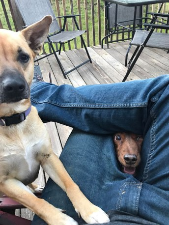funny-hungry-dogs-begging-food-1-5b44ac1dbb37e__605