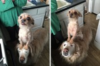 funny-hungry-dogs-begging-food-10-5b44ad610a962__605