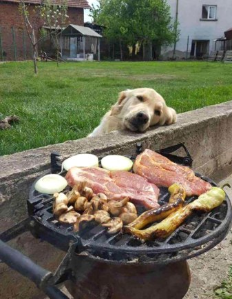 funny-hungry-dogs-begging-food-3-5b44ac40268c2__605