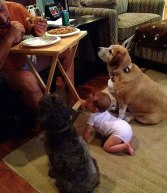 funny-hungry-dogs-begging-food-33-5b44b05e42a0d__605