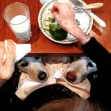funny-hungry-dogs-begging-food-69-5b44b5c7a8d3d__605