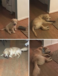 Bear's best friend is a brick.