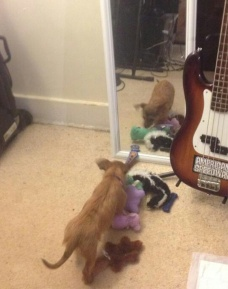 She's bringing toys to the mirror dog.