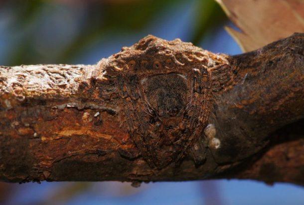 wrap-around-spider-branch-2-768x518