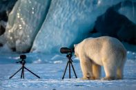comedy-wildlife-photography-awards-finalists-2018-15-5b9b576cf0c8e__880