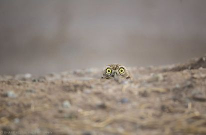 comedy-wildlife-photography-awards-finalists-2018-18-5b9b57734af09__880