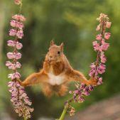 comedy-wildlife-photography-awards-finalists-2018-7-5b9b575e04c57__880