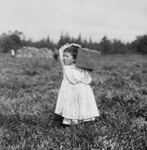 Jennie Camillo, 6-years old. Cranberry picker in Pemberton, NJ.
