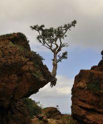treebigrock