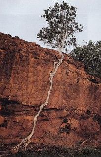 treecliff