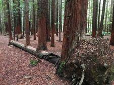 treefellover