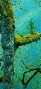 treefromtree