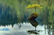 treeofenchantment