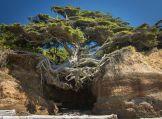treeoflifeolympicnational park