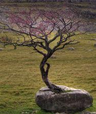 treerock