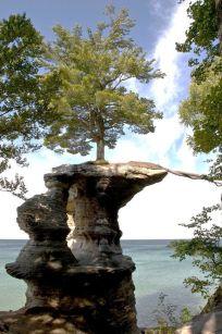 treerootstretch