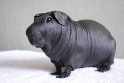 Dude looks like a tiny hippo. Cool.