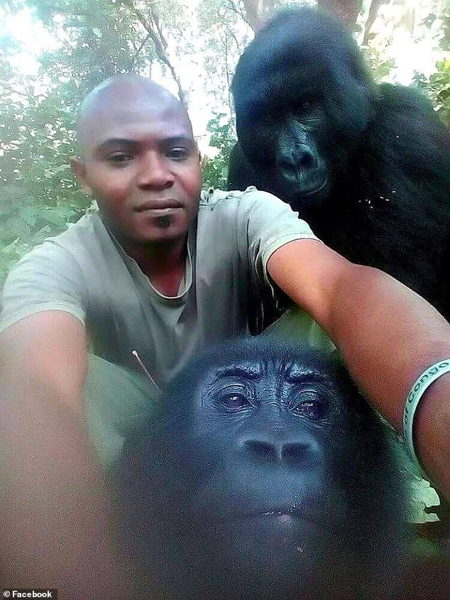 Incredible Photos of the Day: Gorilla Selfies | Shoe: Untied