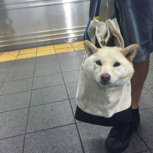 dog21