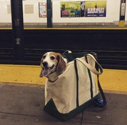 dog22