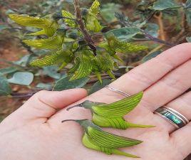 hummingbird-petals-1.jpg.optimal