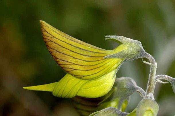 hummingbird-petals-2.jpg.optimal