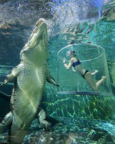 Salt Water Crocodile vs. Human. That looks dangerous.