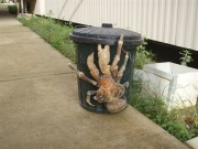 Giant Ass Crab. That's just horrific.