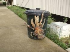 Giant Ass Crab. That's just horrific.