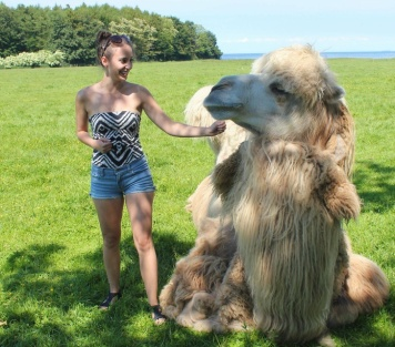 Camel vs. Human. I used to have a pet camel named Misu. He was mean.