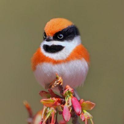 black-throated-bushtit-bird-photography-18-5ea93a571e88a__880