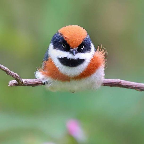 black-throated-bushtit-bird-photography-3-5ea93a3ab683d__880