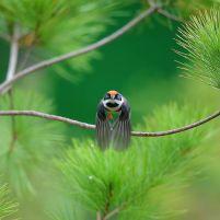 black-throated-bushtit-bird-photography-5-5ea93a3e7dd65__880